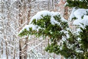 Stay Up-to-Date with the Northern Pines Winter Newsletter